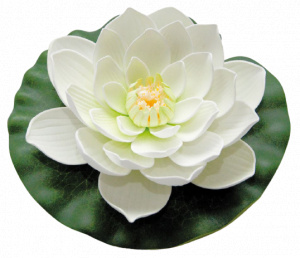 Velda waterlelie Lotus 20 cm foam wit/groen