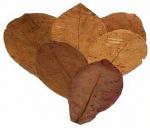 CeramicNature bladeren Catappa M plantaardig bruin 10 stuks