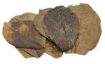 CeramicNature bladeren Catappa Nano plantaardig bruin 10 stuks