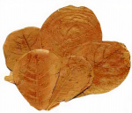 CeramicNature bladeren Catappa XL plantaardig bruin 200 stuks