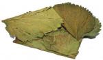 CeramicNature bladeren Mulberry plantaardig groen 10 stuks
