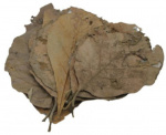 CeramicNature teakbladeren plantaardig bruin 10 stuks