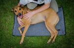 FitPAWS hondenbed K9fit merinowol grijs maat M/L